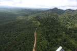 Logged forest and oil palm in Borneo -- sabah_aerial_2806
