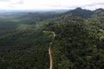 Logged forest and oil palm in Borneo -- sabah_aerial_2807