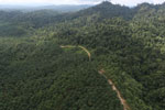 Logged forest and oil palm in Borneo -- sabah_aerial_2815