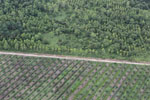 Timber plantation next to an oil palm plantation -- sabah_aerial_2820