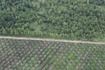 Timber plantation next to an oil palm plantation -- sabah_aerial_2821