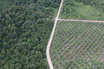 Logged forest, oil palm estate, and timber plantation in Borneo -- sabah_aerial_2822