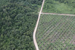 Logged forest, oil palm estate, and timber plantation in Borneo -- sabah_aerial_2823