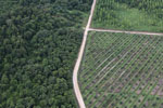 Logged forest, oil palm estate, and timber plantation in Borneo -- sabah_aerial_2824