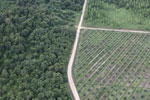 Logged forest, oil palm estate, and timber plantation in Borneo -- sabah_aerial_2825