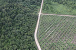 Logged forest, oil palm estate, and timber plantation in Borneo -- sabah_aerial_2826