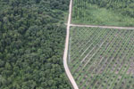 Logged forest, oil palm estate, and timber plantation in Borneo -- sabah_aerial_2827