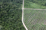 Logged forest, oil palm estate, and timber plantation in Borneo