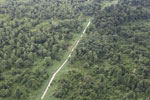 Logging road through heavily degraded forest -- sabah_aerial_2831