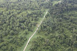 Logging road through heavily degraded forest -- sabah_aerial_2832