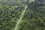 Logging road through heavily degraded forest