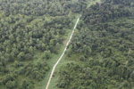 Logging road through heavily degraded forest -- sabah_aerial_2834