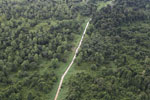 Logging road through heavily degraded forest -- sabah_aerial_2835