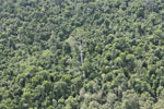 Heavily logged forest in Borneo -- sabah_aerial_2837