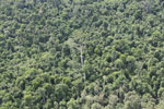 Heavily logged forest in Borneo -- sabah_aerial_2838