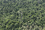 Heavily logged forest in Borneo -- sabah_aerial_2839