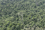 Heavily logged forest in Borneo -- sabah_aerial_2840