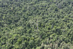 Heavily logged forest in Borneo -- sabah_aerial_2842