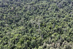 Heavily logged forest in Borneo -- sabah_aerial_2843