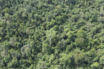 Heavily logged forest in Borneo -- sabah_aerial_2844