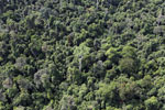 Heavily logged forest in Borneo -- sabah_aerial_2845