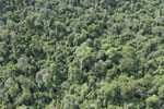 Heavily logged forest in Borneo -- sabah_aerial_2846