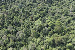 Heavily logged forest in Borneo -- sabah_aerial_2847