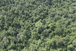Heavily logged forest in Borneo -- sabah_aerial_2848