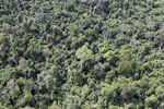 Heavily logged forest in Borneo -- sabah_aerial_2849