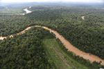 Clearing for oil palm along the Kinabatangan River  -- sabah_aerial_2932