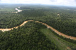 Clearing for oil palm along the Kinabatangan River  -- sabah_aerial_2937