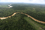 Clearing for oil palm along the Kinabatangan River  -- sabah_aerial_2938