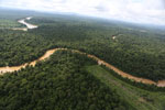 Clearing for oil palm along the Kinabatangan River  -- sabah_aerial_2943