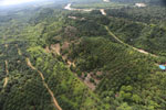 Oil palm near the Kinabatangan -- sabah_aerial_2963
