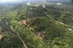 Oil palm near the Kinabatangan -- sabah_aerial_2965