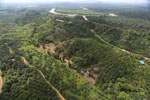Oil palm near the Kinabatangan -- sabah_aerial_2968