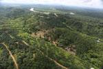 Oil palm near the Kinabatangan -- sabah_aerial_2973
