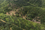 Oil palm near the Kinabatangan -- sabah_aerial_2974
