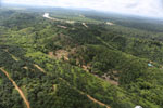 Oil palm near the Kinabatangan -- sabah_aerial_2975