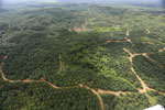 Oil palm near the Kinabatangan -- sabah_aerial_2977