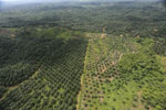 Oil palm plantation in a lowland area near Sandakan, Sabah -- sabah_aerial_2980