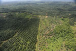 Oil palm plantation in a lowland area near Sandakan, Sabah -- sabah_aerial_2981