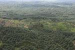 Oil palm plantation in a lowland area near Sandakan, Sabah -- sabah_aerial_2983
