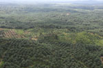 Oil palm plantation in a lowland area near Sandakan, Sabah -- sabah_aerial_2985
