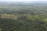 Oil palm plantation in a lowland area near Sandakan, Sabah -- sabah_aerial_2986