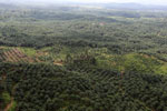 Oil palm plantation in a lowland area near Sandakan, Sabah -- sabah_aerial_2987