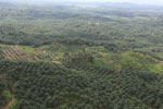 Oil palm plantation in a lowland area near Sandakan, Sabah -- sabah_aerial_2988