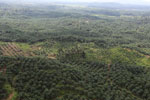 Oil palm plantation in a lowland area near Sandakan, Sabah -- sabah_aerial_2989