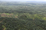 Oil palm plantation in a lowland area near Sandakan, Sabah -- sabah_aerial_2990