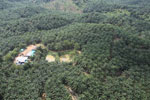 Oil palm plantation in a lowland area near Sandakan, Sabah -- sabah_aerial_2993